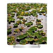 Lone Lake Lily Pads Shower Curtain