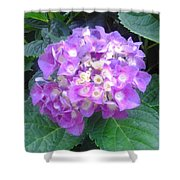 Lone Lilac Shower Curtain