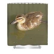 Lone Mallard Duck Duckling Shower Curtain