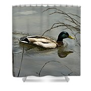 Lone Mallard Shower Curtain