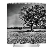 Lone Oak Tree In Black And White Shower Curtain