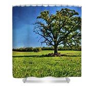 Lone Oak Tree In Wisconsin Field Shower Curtain