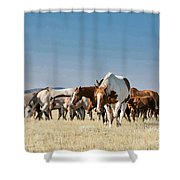 Lone Paint Shower Curtain
