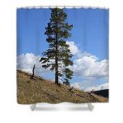 Lone Pine, Yellowstone Shower Curtain