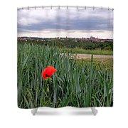 Lone Poppy Amongst Field Of Hops Shower Curtain