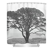 Lone Scots Pine, Crannoch Woods Shower Curtain