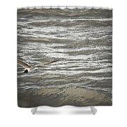 Lone Sea Gull Shower Curtain
