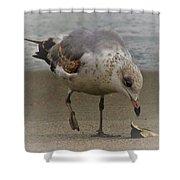 Lone Seagull Shower Curtain