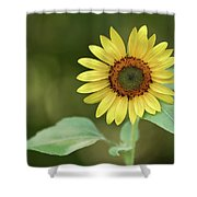 Lone Sunflower Shower Curtain