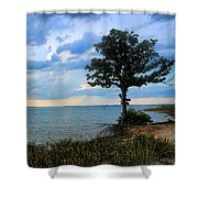 Lone Tree And Beach Flowers Shower Curtain
