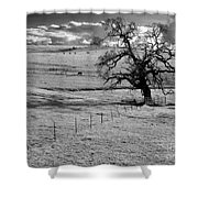 Lone Tree And Cows 2 Shower Curtain