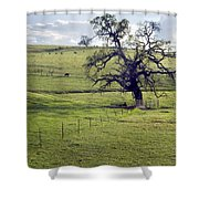 Lone Tree And Cows Shower Curtain