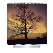Lone Tree At Sunrise Shower Curtain