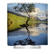 Lone Tree, Llyn Padarn Shower Curtain