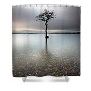 Lone Tree Loch Lomond Shower Curtain