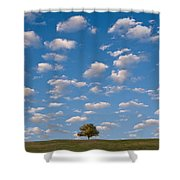Lone Tree Morning Shower Curtain