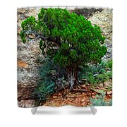 Lone Tree On A Cliff Shower Curtain