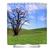 Lone Tree - Rolling Hills - Summer Sky Shower Curtain