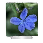 Lone Wildflower Shower Curtain