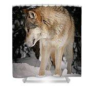 Lone Wolf IIi Shower Curtain