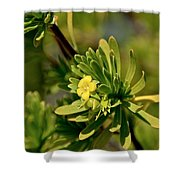 Lone Yellow Bloom Shower Curtain