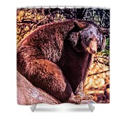 Lonely Black Bear On A Rock Shower Curtain