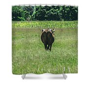 Lonely Cow 2 Shower Curtain