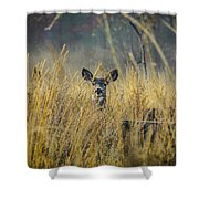 Lonely Deer In The Field Shower Curtain