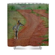 Lonely Jackal Shower Curtain