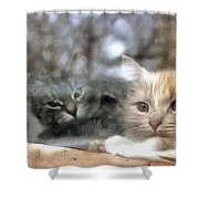Lonely Kittens Behind The Glass Shower Curtain