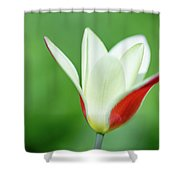 Lonely Lady Tulip Shower Curtain