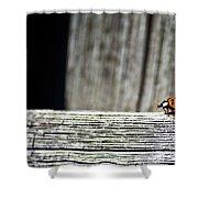 Lonely Ladybug Shower Curtain