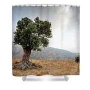 Lonely Olive Tree And Stormy Cloudy Sky Shower Curtain