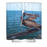 Lonely Pelican  Shower Curtain