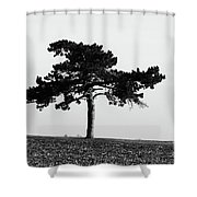 Lonely Pine Shower Curtain