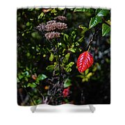 Lonely Red Leaf Shower Curtain
