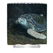 Lonely Sea Turtle Shower Curtain