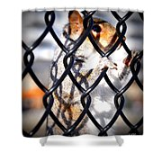 Lonely Squirrel  Shower Curtain