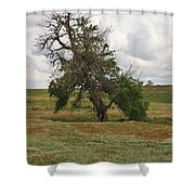 Lonely Tree In West Texas Shower Curtain