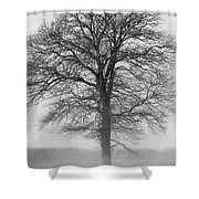 Lonely Winter Tree Shower Curtain