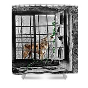 Lonely Wolf Shower Curtain