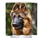 Long Coated German Shepherd Dog Shower Curtain