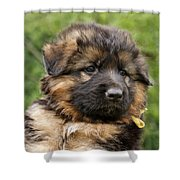 Long Coated Puppy Shower Curtain