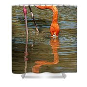 Long Colors II Shower Curtain