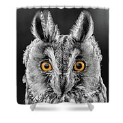 Long Eared Owl 2 Shower Curtain