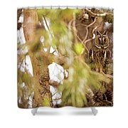 Long-eared Owl Asio Otus In A Tree Shower Curtain