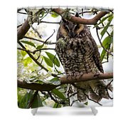 Long-eared Owl Shower Curtain