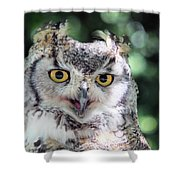 Long Eared Owl In The Trees Shower Curtain