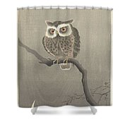 Long-eared Owl On Bare Tree Branch, Ohara Koson, 1900 - 1930 Shower Curtain