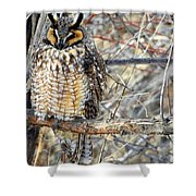 Long Eared Owl Resting Shower Curtain